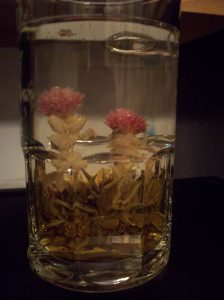 Love At First Sight, after the flower was transferred to a glass mug / Photo taken by Sara Letourneau